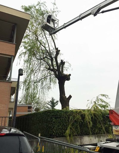 potatura alberi mendrisio