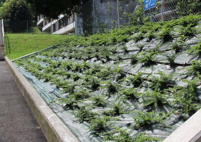 realizzazione giardini ticino